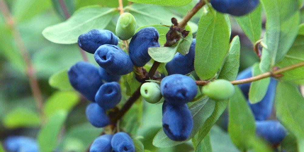Ryan Fruit Pic